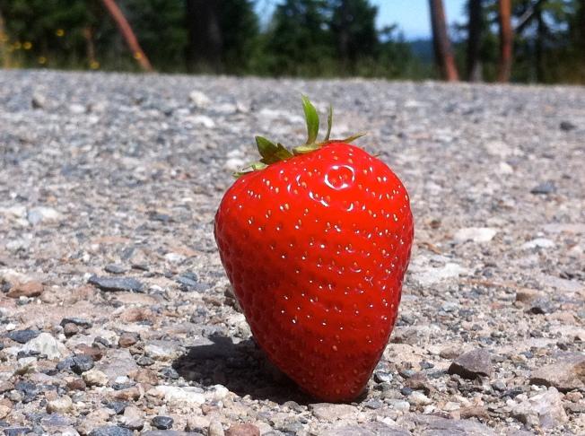 strawberry road