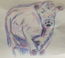 bull colour